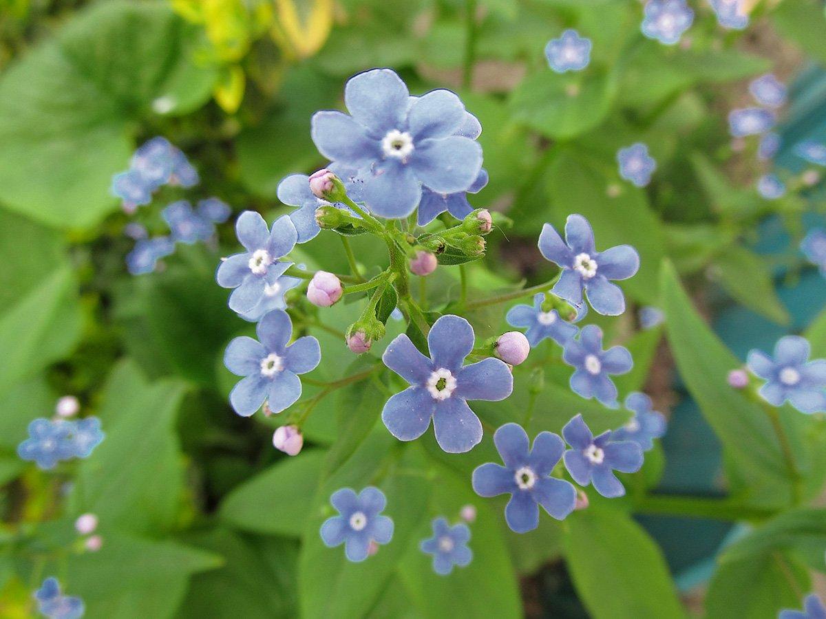 Комнатные цветы фото и название деревья цветут