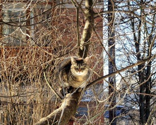 Коты прилетели... Весна!