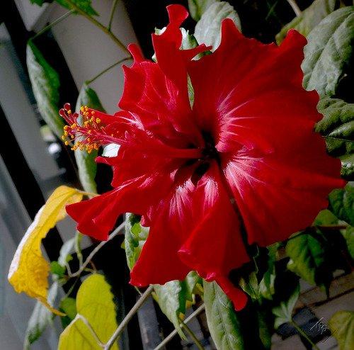 Опять разные цветы
