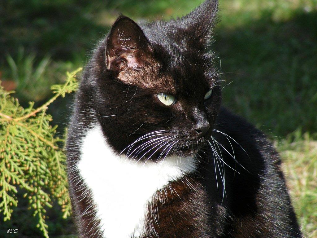 Дворовой кот