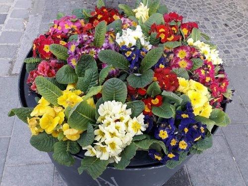 Радуга цветов