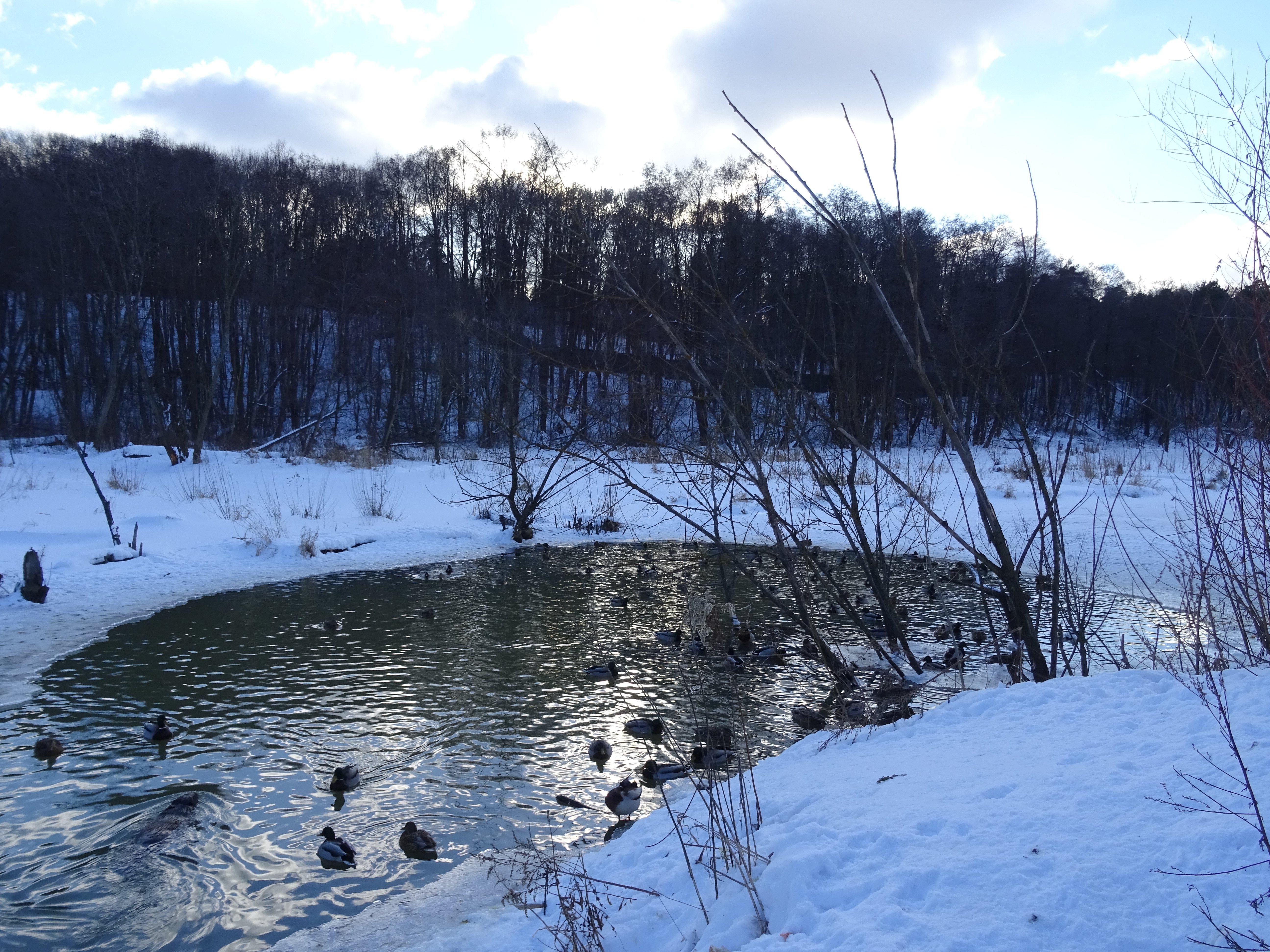 картинки полыньи на реке подушка