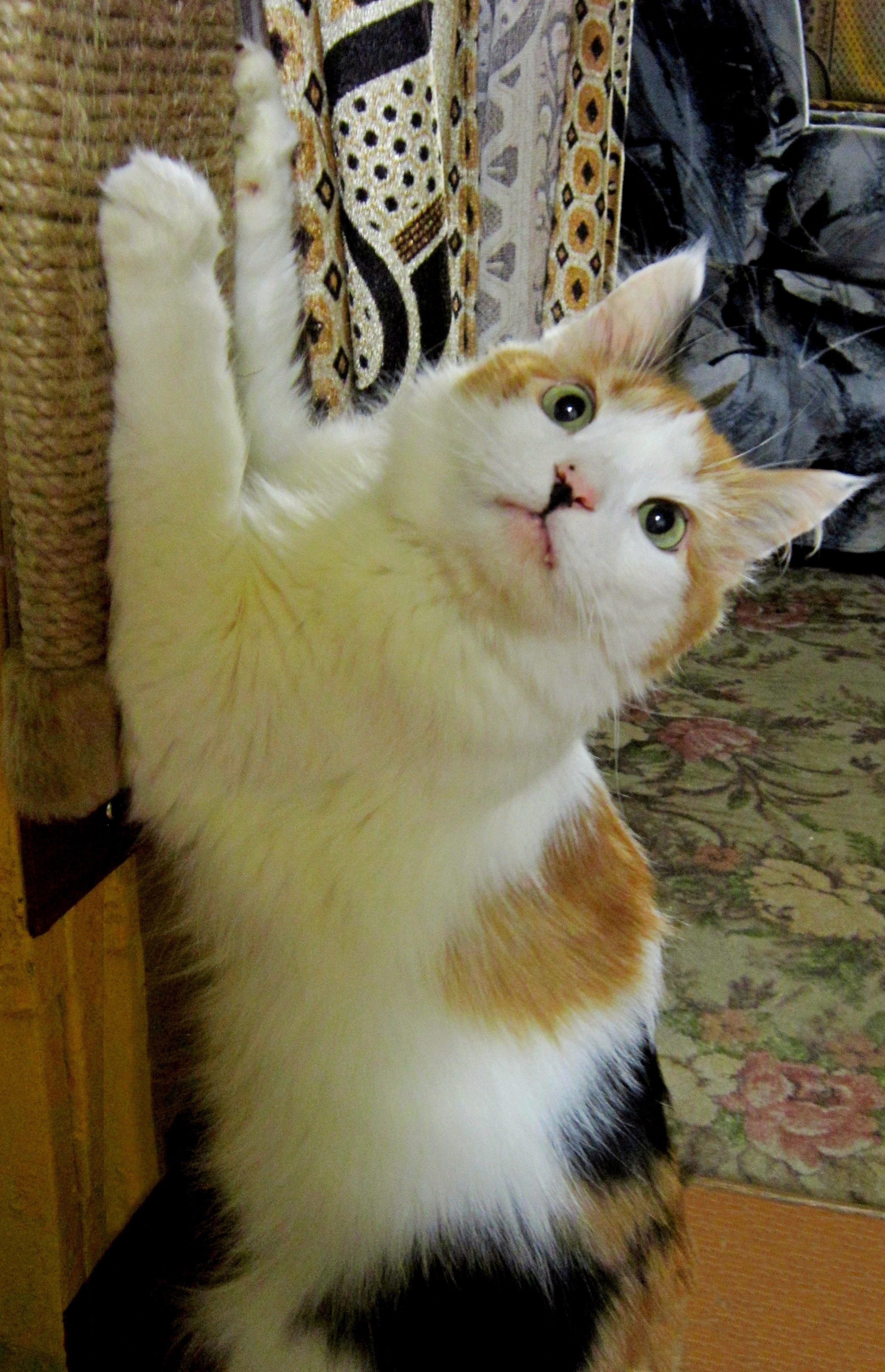Памяти любимой кошки Ники.