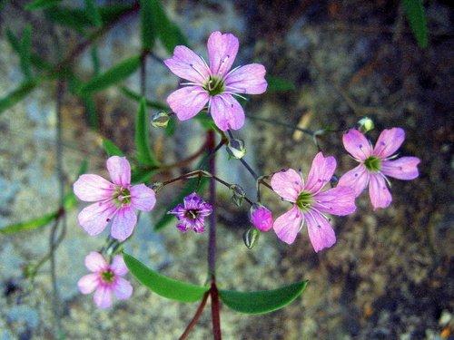 Нежные цветочки