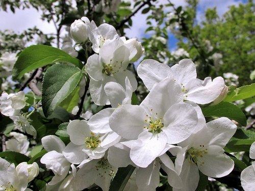 Белый цвет весны