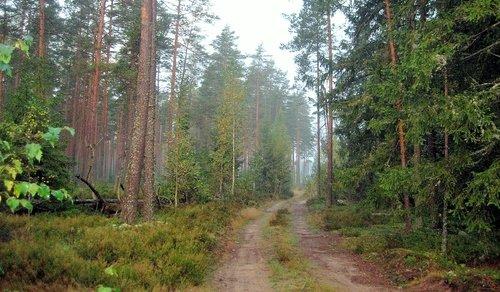 Утром в осеннем лесу