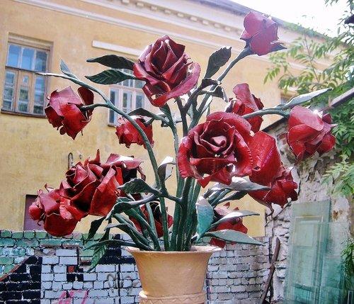 Роза кузнеца