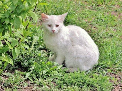 Беленький котик