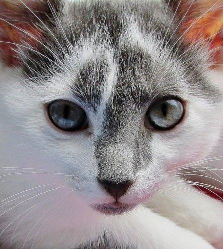 Портрет котика