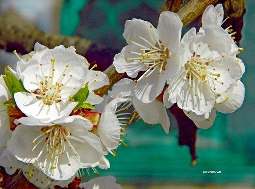 Весна на цветение богата!
